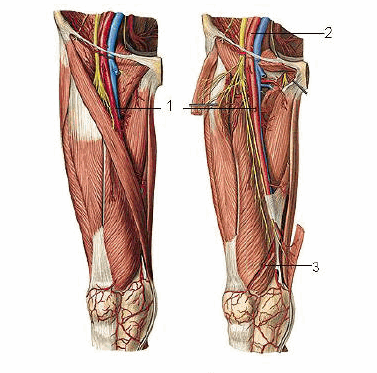 Computed Tomography Angiography of the Lower Extremities (64-128-slice)